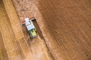 Grain Harverst