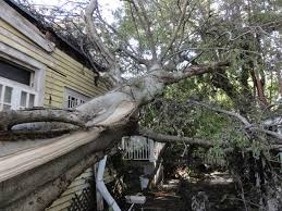 Tree falls on neighbor's house