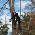 Tree Removal insurance kentucky